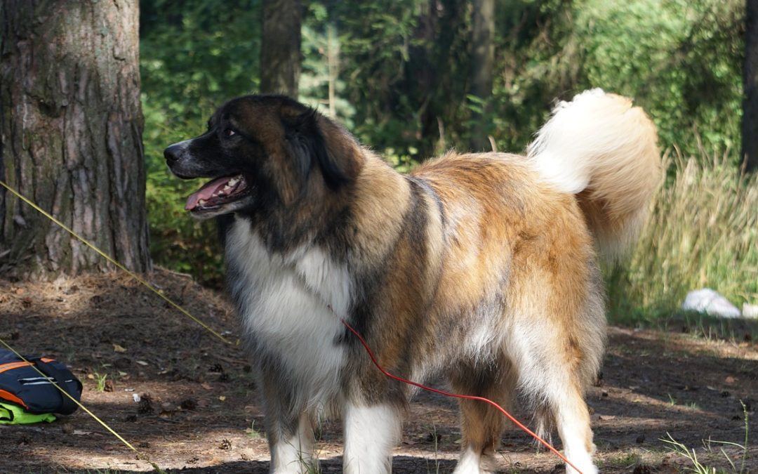 4 Tips to Enjoy Camping with Your Pet